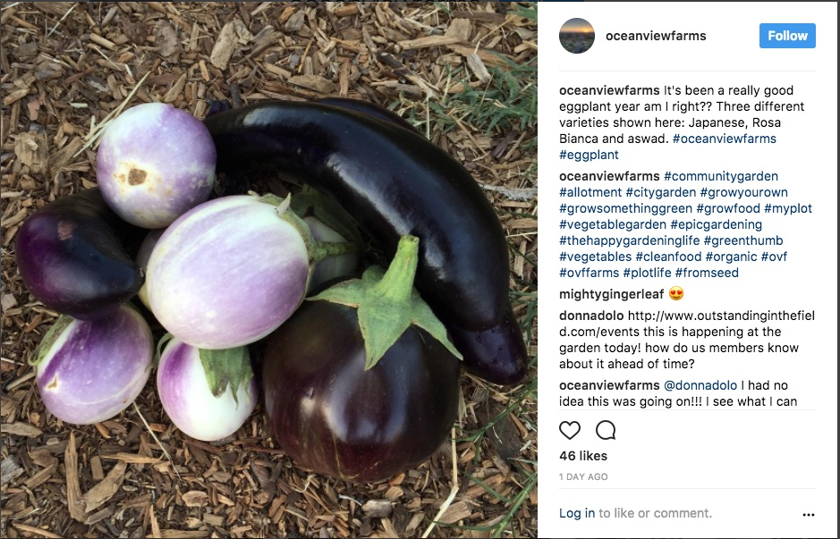 instagram photo of the month: eggplant harvest