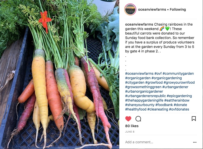 rainbow carrots from the OVF donates collection