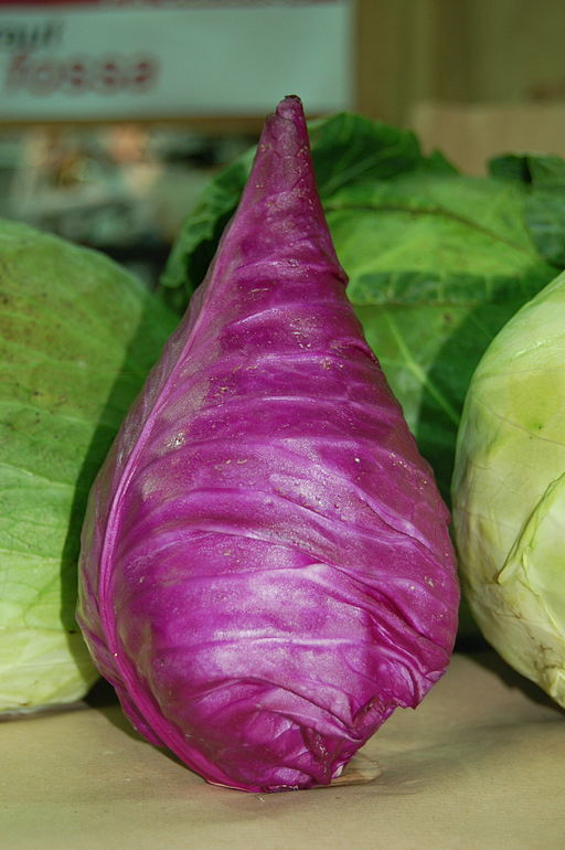 purple point cabbage