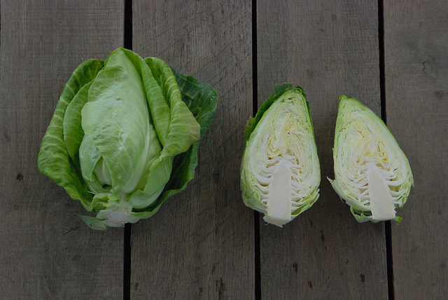 Green pointy cabbage